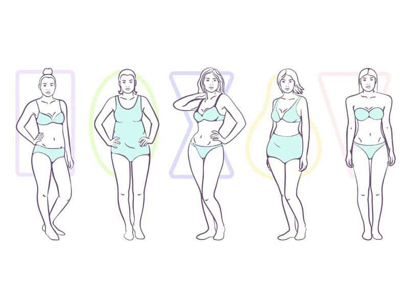 a line up of all of the different body types
